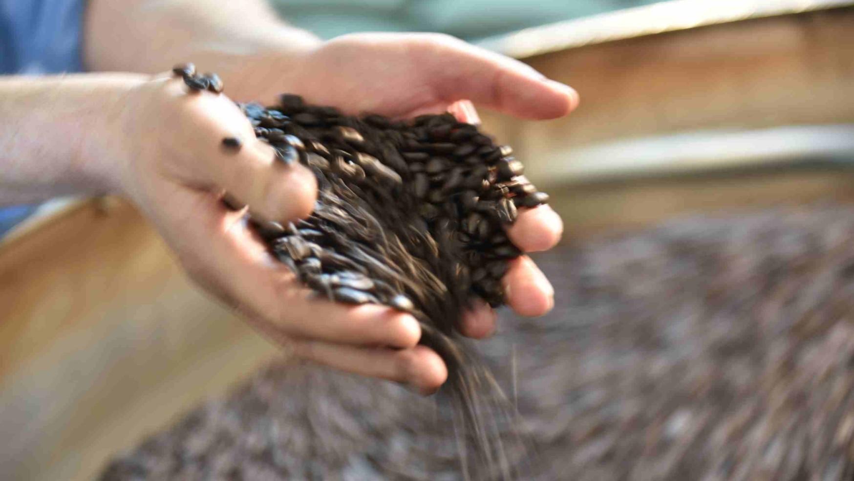 Italmoka: il caffè interamente tostato a legna 100% made in Naples